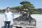 Sanh cổ của đại gia Bắc Ninh, 30 năm trước mua 7 triệu, giờ có giá 10 tỷ đồng