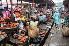 Khu chợ bán hải sản rẻ hơn rau, con gì cũng có kích thước 'khủng'