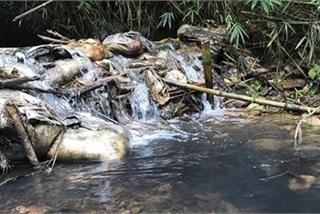Nghe VietNamNet: Bắt 2 đối tượng liên quan đến việc đổ dầu gây ô nhiễm nguồn nước sông Đà