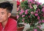 Đột nhập lăng mộ trộm cây hoa giấy trị giá 80 triệu đồng