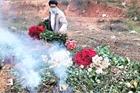 Xót xa nông dân cắt hoa đem đi đốt