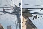 """Lạ lùng đàn khỉ """"tung hoành"""" ngay giữa TP Hồ Chí Minh"""