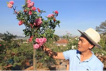 Đột nhập vườn bonsai hoa hồng bạc tỷ của 'ông chú' điển trai