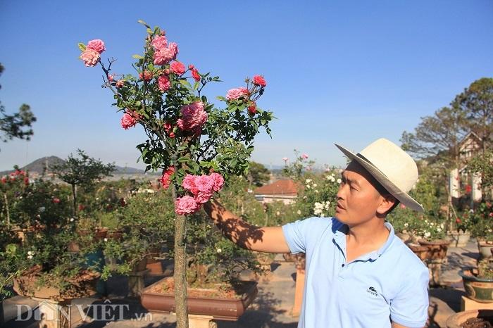 """dot nhap vuon bonsai hoa hong bac ty cua """"ong chu"""" dien trai hinh anh 6"""