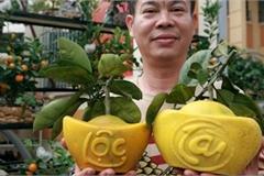 Bưởi Diễn hình thỏi vàng in chữ Tài - Lộc giá 1,5 triệu/cặp chơi Tết