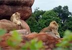 10 vườn thú nên tham quan một lần khi đi du lịch