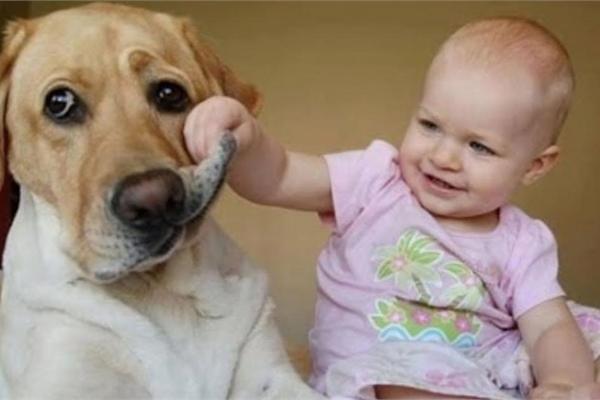 Cười ngất với phản ứng đáng yêu  của các nhóc tỳ khi lần đầu tiên gặp chó, mèo