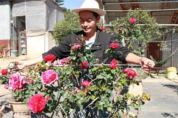 'Cụ' hồng cổ Pháp 70 năm tuổi trả 100 triệu, chủ 'kiêu' chưa bán