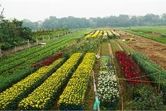 Chẳng ngờ ngay gần Hà Nội lại có làng hoa đẹp nao lòng nhường này