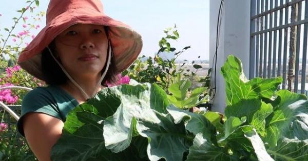 Chán việc văn phòng về trồng vườn rau trên sân thượng, vạn người mê
