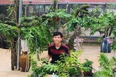 Vườn lan rừng 'khủng' của 9X Quảng Nam, có 10.000 giò giả hạc