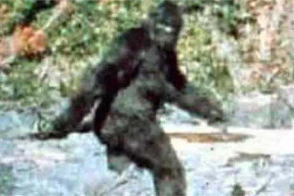 Quái vật Bigfoot nắm giữ bí ẩn về nguồn gốc con người?