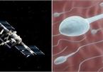 Phát hiện bất ngờ về khả năng sống của tinh trùng ở ngoài vũ trụ