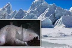 Thợ lặn phát hiện bí mật sốc dưới lớp băng Nam cực