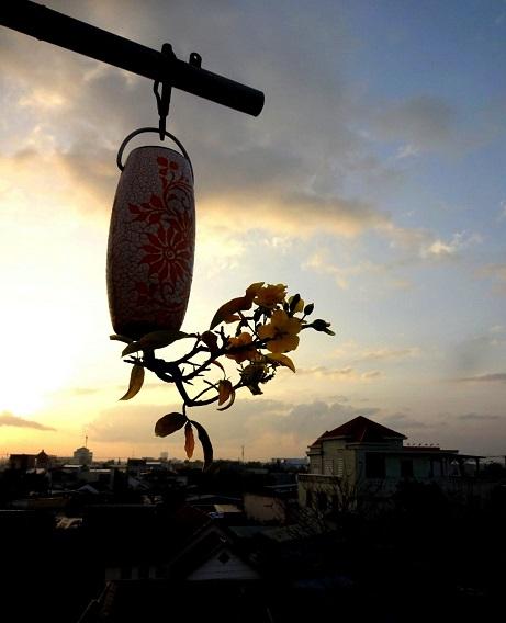 "ngam dan bonsai ""moc nguoc"" cuc doc la cua lao gan xu quang hinh anh 9"