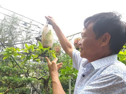 "ngam dan bonsai ""moc nguoc"" cuc doc la cua lao gan xu quang hinh anh 6"