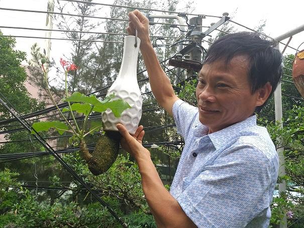"ngam dan bonsai ""moc nguoc"" cuc doc la cua lao gan xu quang hinh anh 7"