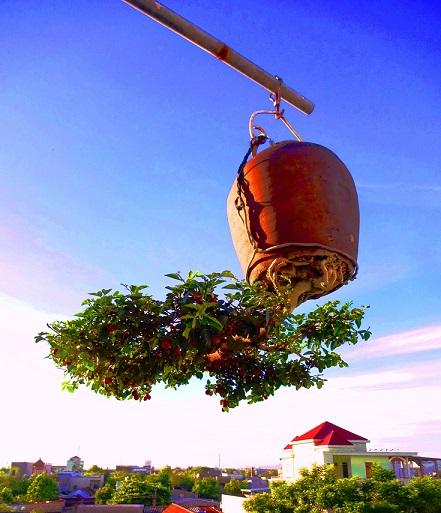 "ngam dan bonsai ""moc nguoc"" cuc doc la cua lao gan xu quang hinh anh 11"
