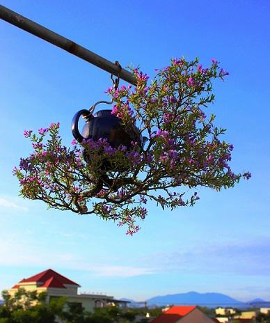 "ngam dan bonsai ""moc nguoc"" cuc doc la cua lao gan xu quang hinh anh 1"