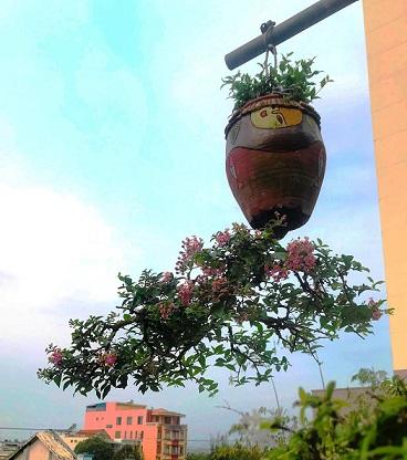 "ngam dan bonsai ""moc nguoc"" cuc doc la cua lao gan xu quang hinh anh 2"