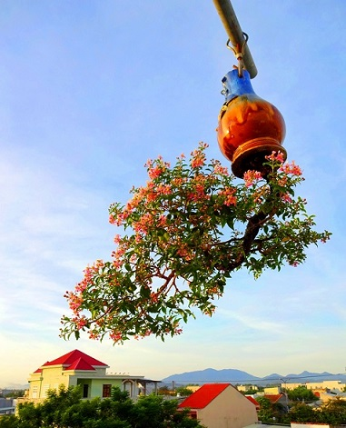 "ngam dan bonsai ""moc nguoc"" cuc doc la cua lao gan xu quang hinh anh 4"