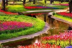 Những địa danh không nên bỏ qua khi đến đất nước của hoa tuy-líp và cối xay gió