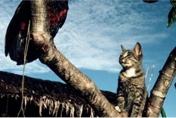Bất ngờ 'sát thủ' hiền lành giết hàng tỷ động vật hoang dã