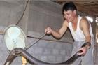 Ớn lạnh người đàn ông nuôi hơn 1.000 con 'mãng xà' cực độc ở Lào Cai