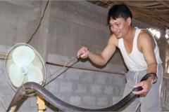 Ớn lạnh người đàn ông nuôi 1.000 con 'mãng xà' cực độc ở Lào Cai