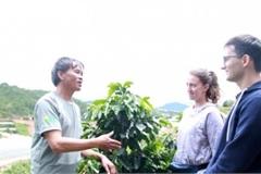 Ở nơi sở hữu cà phê quý hiếm nhất, thơm ngon nhất giá 2,2 triệu/kg