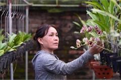 'Đột nhập' vườn lan rộng 2ha cả trăm loại 'vạn người mê' ở Hòa Bình
