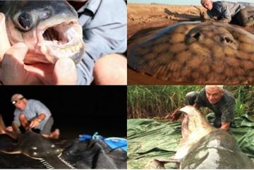 Bộ sưu tập thủy quái ăn thịt người của cần thủ săn cá bậc nhất