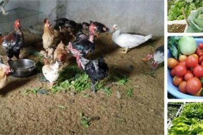 'Nông trại' trên sân thượng trồng rau, nuôi gà của mẹ đảm Quảng Ninh
