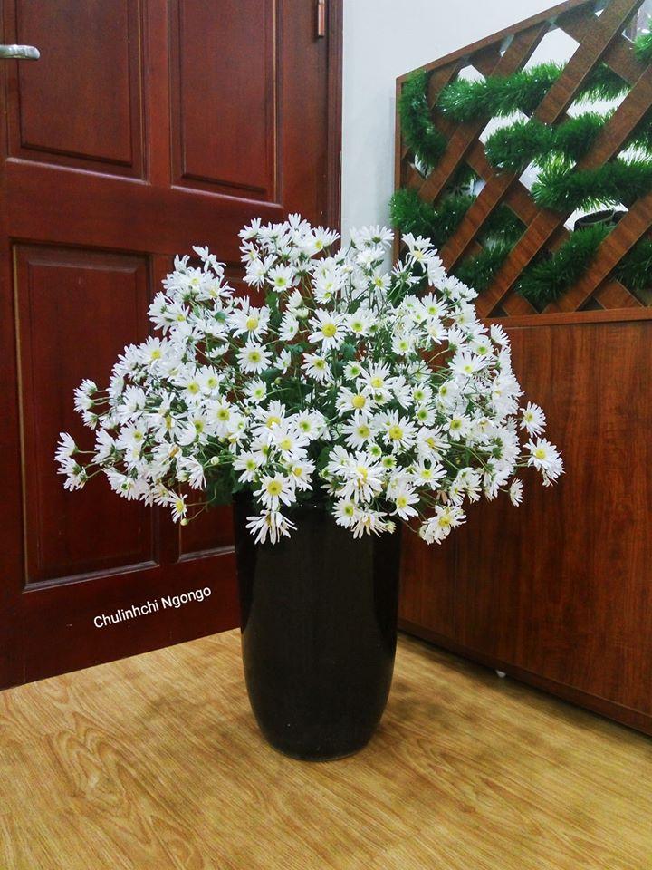 mua cuc hoa mi go cua, bo tui ngay cach trang tri cho ngoi nha them tinh khoi hinh anh 10
