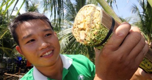 Nghề cực lạ Việt Nam: Massage hoa dừa để kích thích chảy... mật