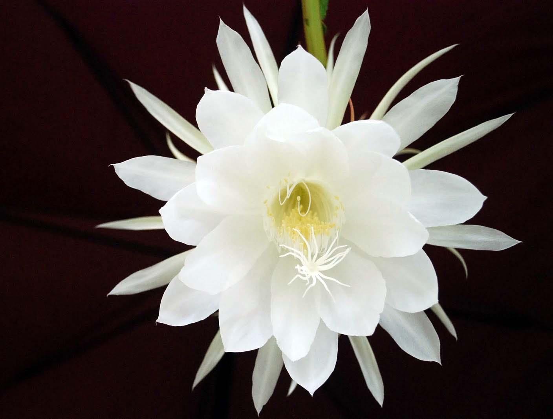 9 loai hoa dat nhat hanh tinh, co loai den vang 9999 cung khong la gi hinh anh 11