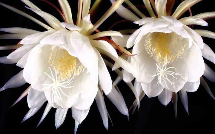 9 loai hoa dat nhat hanh tinh, co loai den vang 9999 cung khong la gi hinh anh 9