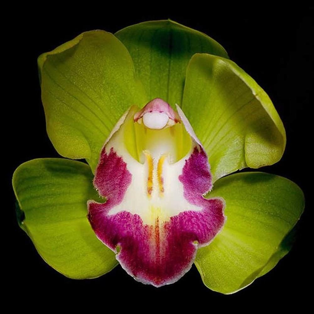 9 loai hoa dat nhat hanh tinh, co loai den vang 9999 cung khong la gi hinh anh 13
