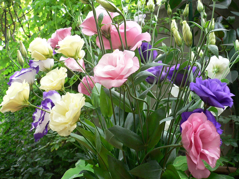 9 loai hoa dat nhat hanh tinh, co loai den vang 9999 cung khong la gi hinh anh 20