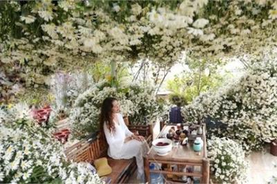 'Lịm tim' trước vườn cúc họa mi trên sân thượng của bà mẹ Hà thành