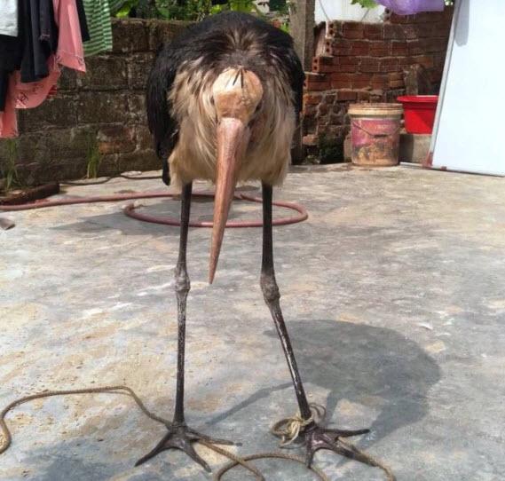 """Chim mặt khỉ, cá ăn bằng thìa và những """"quái vật"""" độc nhất đất Việt Chim-mat-khi-ca-an-bang-thia-va-nhung-suc-khoe-con-chim-con-chi-1566805306-width569heigh-1575531961-width569height542"""