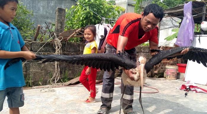 """Chim mặt khỉ, cá ăn bằng thìa và những """"quái vật"""" độc nhất đất Việt Chim-mat-khi-ca-an-bang-thia-va-nhung-suc-khoe-con-chim-con-chi-4-1566805306-width699hei-1575531961-width699height385"""