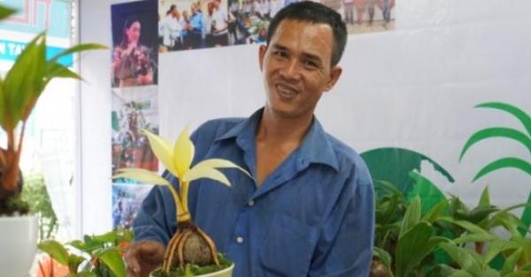 Xuất hiện dừa bonsai đột biến 2 màu cực lạ, hàng độc chơi Tết