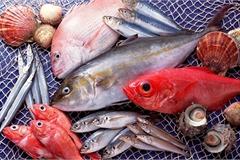 Gợi ý cách chọn và bảo quản cá tươi ngon đúng cách