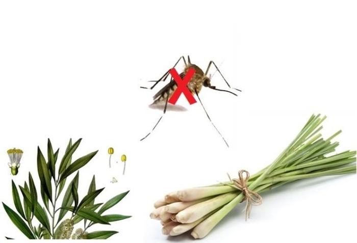 Mẹo xua đuổi muỗi trong nhà có thể bạn chưa biết