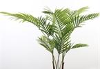 5 cây trồng được ví như điều hòa nhiệt độ, thích hợp trồng mùa nắng nóng
