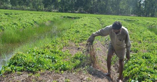 Xử phạt hàng loạt doanh nghiệp thuốc bảo vệ thực vật gian dối
