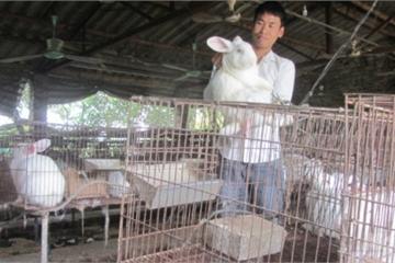 Xin nghỉ hưu sớm về quê nuôi hàng nghìn con thỏ, mỗi năm anh nông dân ở Hải Dương lãi 700 triệu đồng