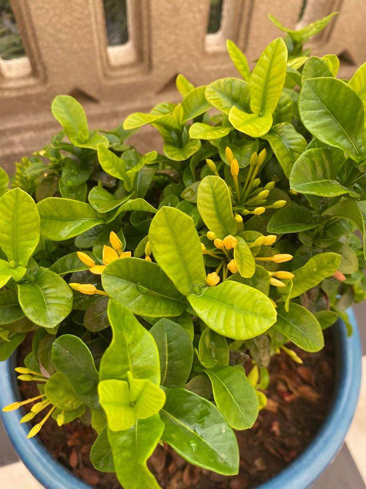 Hoa hậu Giáng My trồng rau và hoa quanh biệt thự trong lúc ở nhà trốn Covid-19 - Ảnh 3.