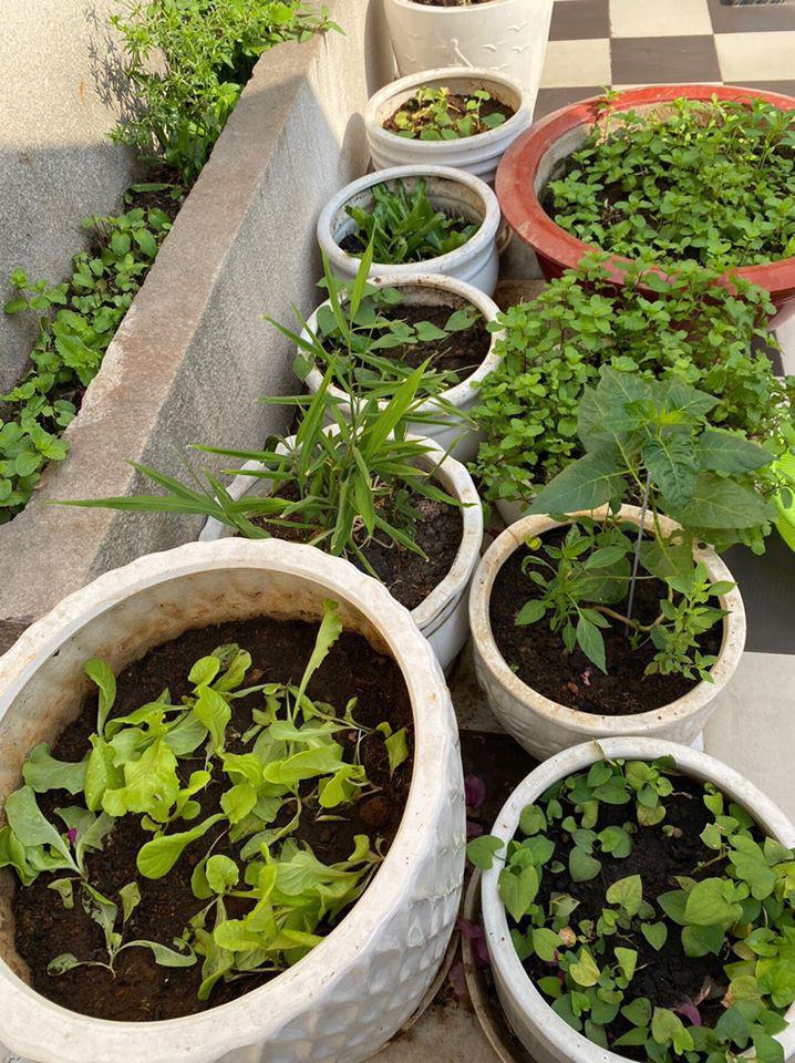 Hoa hậu Giáng My trồng rau và hoa quanh biệt thự trong lúc ở nhà trốn Covid-19 - Ảnh 10.